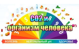 Воздействие углекислого газа на организм человека, участие в процессах жизнедеятельности