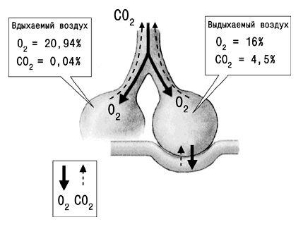 Процент поступающих и уходящих газов