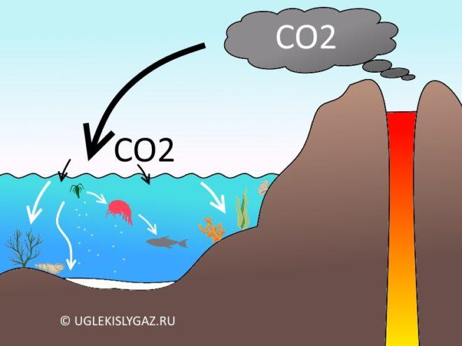 Поглощение океаном CO2