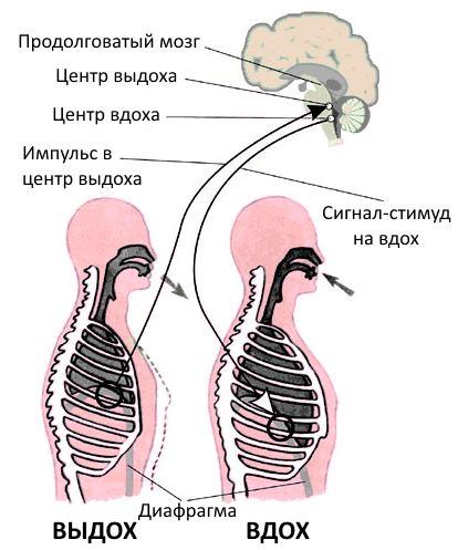 Причины гипертонии в неправильном дыхании!!! Часть 1