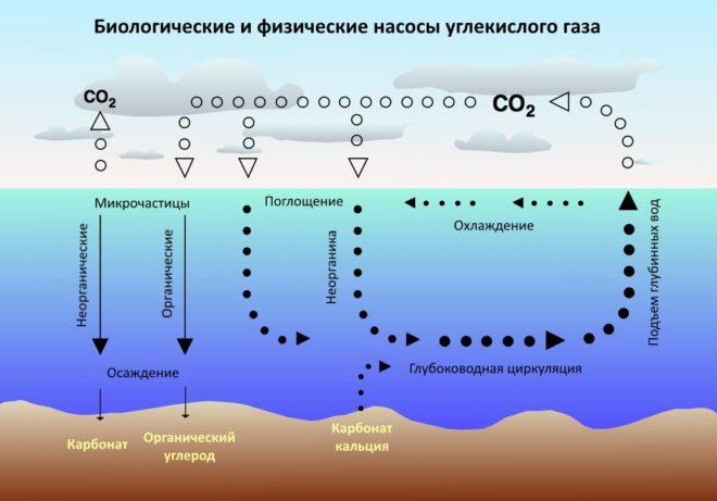 Круговорот co2 в океане