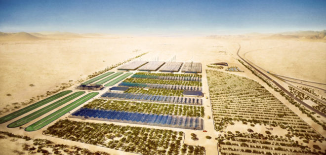 Озеленение пустыни Сахара
